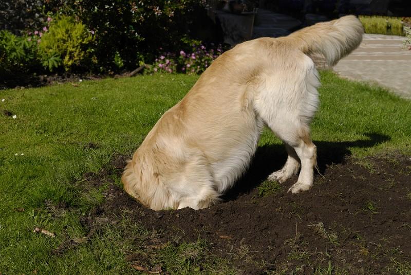 cane-sotterra-cose