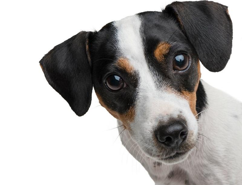 Perch il cane lecca la pip - Cane pipi letto ...