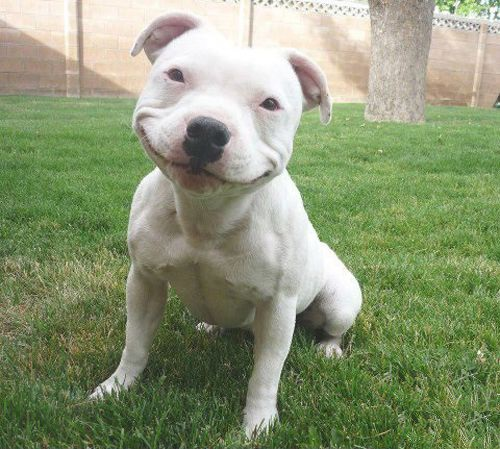 Risultati immagini per cani sorridono