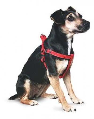 Come indossare la pettorina ad H | Pet Levrieri Onlus ...