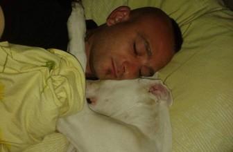 Un cane, Dogo argentino, condannato a morte in Danimarca (Mail bombing)