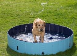 Piscina per cani: fresca estate anche per loro!