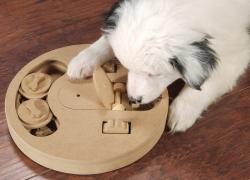 Giochi di attivazione mentale per il cane. Cosa sono?