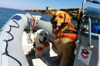 Addio a Merlino, il Cane-Eroe che salvò 6 persone in mare