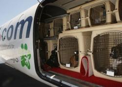 Viaggiare con un cane in aereo