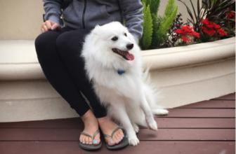 Perché il cane mi si appoggia o si spalma addosso?