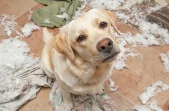 Ansia da separazione nel cane: come lasciarlo solo a casa