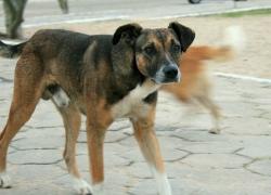 Il cane di Quartiere: Cos'è e come ci diventa