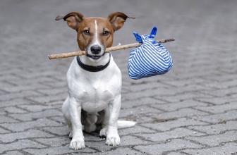 Il cane che scappa continuamente. 3 motivi frequenti e soluzioni