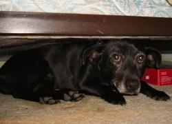 Calmare un cane durante un temporale