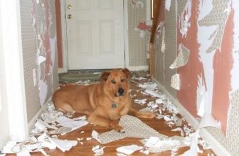 Lasciare il cane solo a casa? Ecco come fare