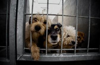 Palermo: 480 euro se adotti un cane dal canile