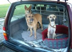 Cane in auto: il crash test dell'Adac (video)