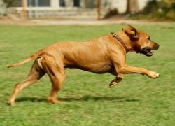 6 segni che il tuo cane ha bisogno di più esercizio fisico