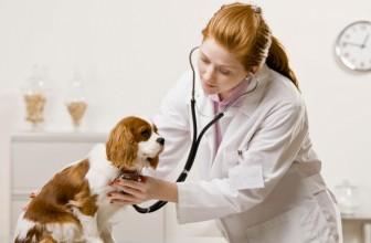 L'insufficenza cardiaca nel cane