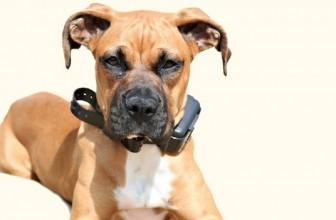Usa il collare elettrico per addestrare il cane: denunciato un 67enne