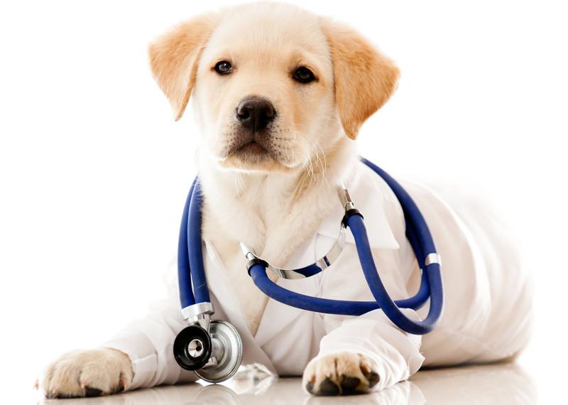 5 Motivi per i quali avere un cane fa bene alla salute