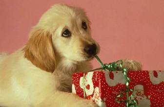 Un cane non si regala