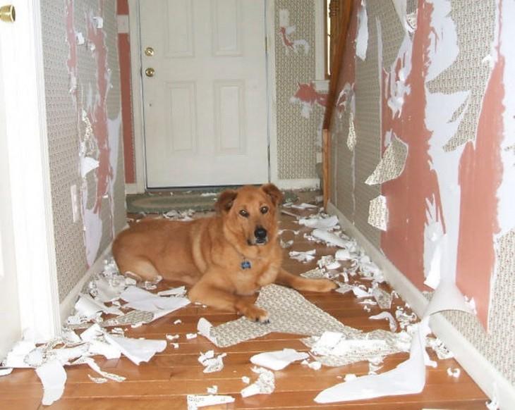 Lasciare Il Cane Solo A Casa Ecco Come Fare