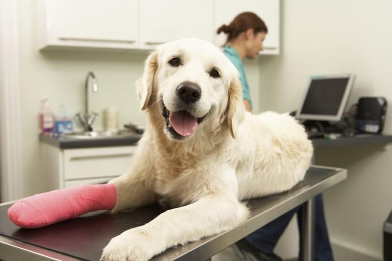 7 motivi per cui il cane zoppica
