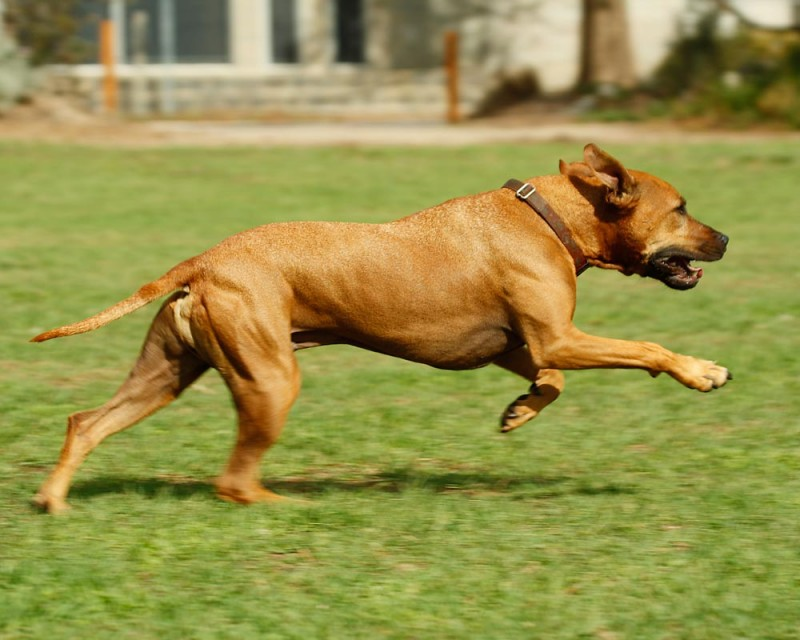 segni-cane-ha-bisogno-di-piu-esercizio-fisico