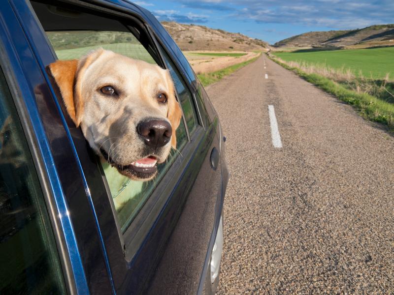 Viaggiare con un cane in Europa