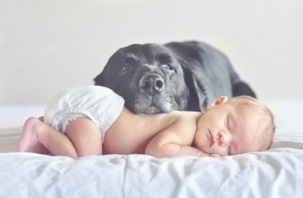 Come NON presentare un neonato ad un cane