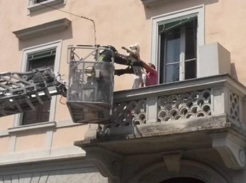Cane chiuso in balcone per 3 giorni: denunciato il proprietario