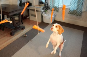 Cane VS Carote Volanti: Video Divertente