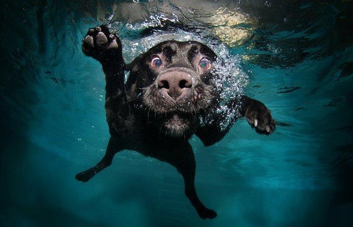 Come insegnare al cane a non aver paura dell\'acqua