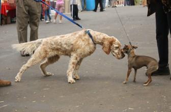 Come gestire gli incontri fra Cani per strada