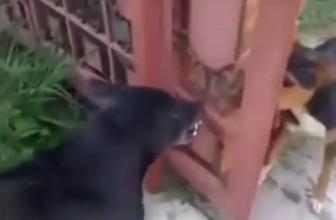 Video Divertente: Due cani e un cancello