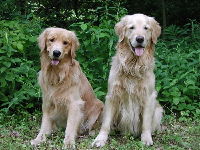 Come far incontrare due cani in casa