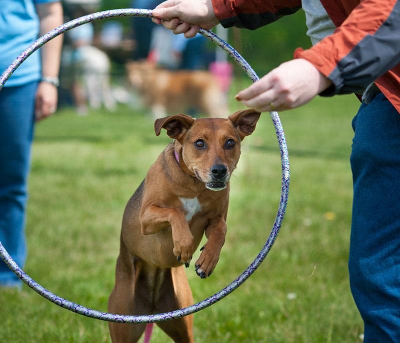Hula Hop con il cane