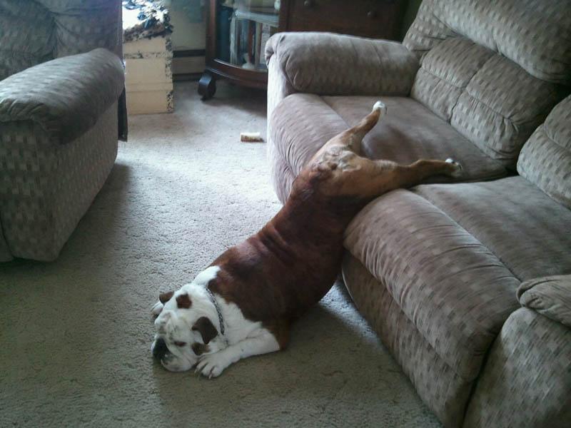 Il letto del cane, uno spazio tutto suo