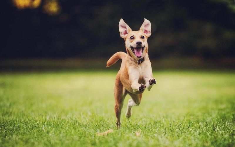 7 semplici cose che rendono il tuo cane felice