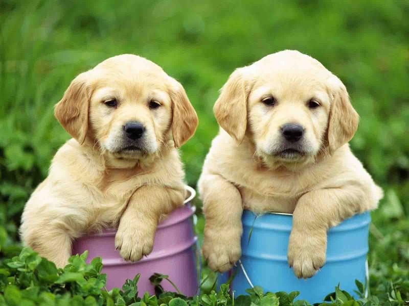 7 rumori che il cucciolo dovrebbe imparare a conoscere da subito