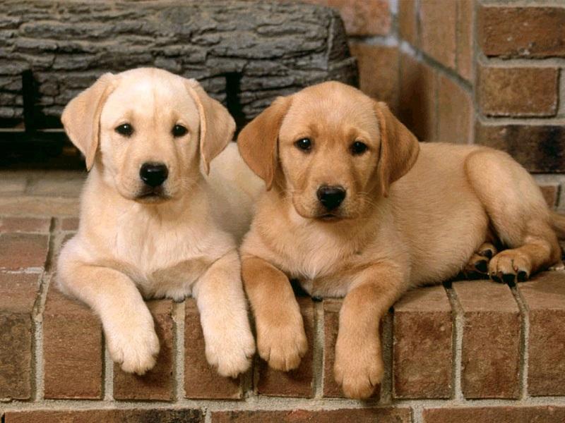 Far socializzare il cane da cucciolo