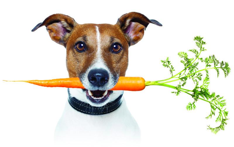 verdure-ortaggi-fanno-bene-cani