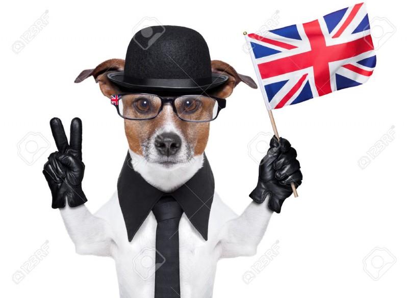 Viaggiare con un cane nel Regno Unito, Svezia e Finlandia