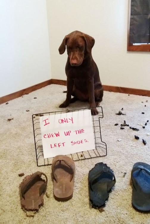 30-perros-que-no-tienen-verguenza-2-504x750