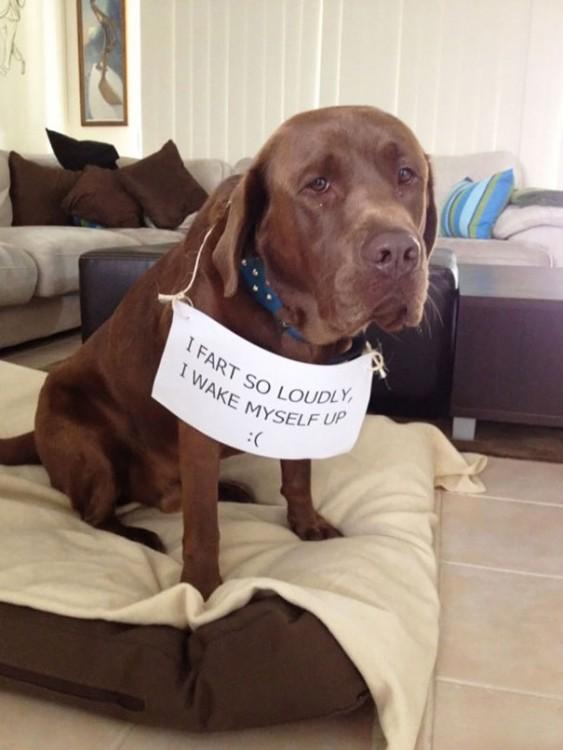 30-perros-que-no-tienen-verguenza-4-563x750