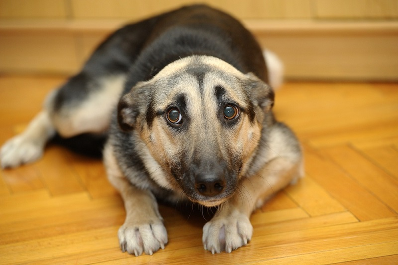 Perchè il mio cane trema? 4 motivi frequenti