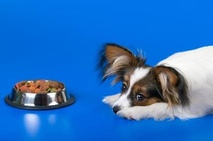 Perchè il mio cane non mangia? 5 motivi frequenti
