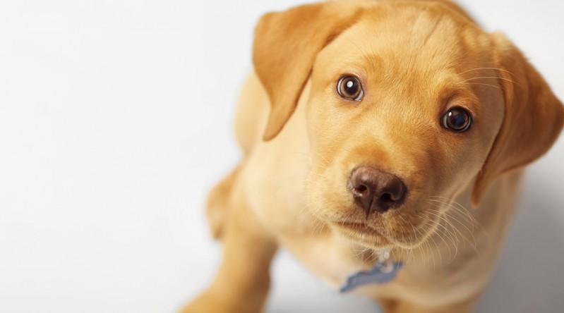 cane-perfetto