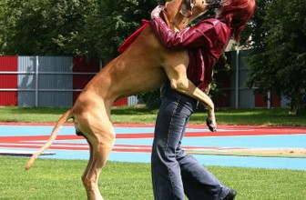 Il mio cane salta addosso! Come farlo smettere?