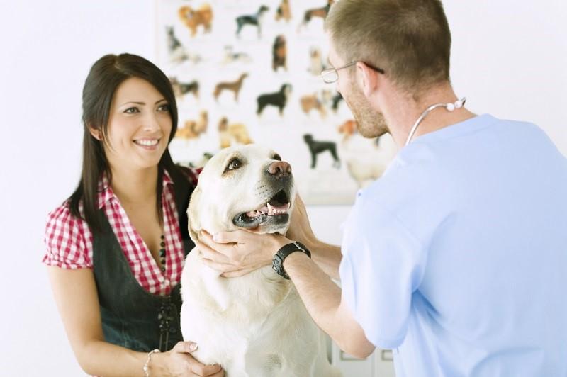 risparmiare-spese-veterinarie