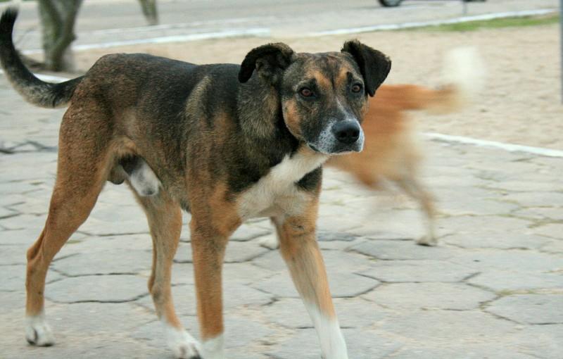 cane-di-quartiere
