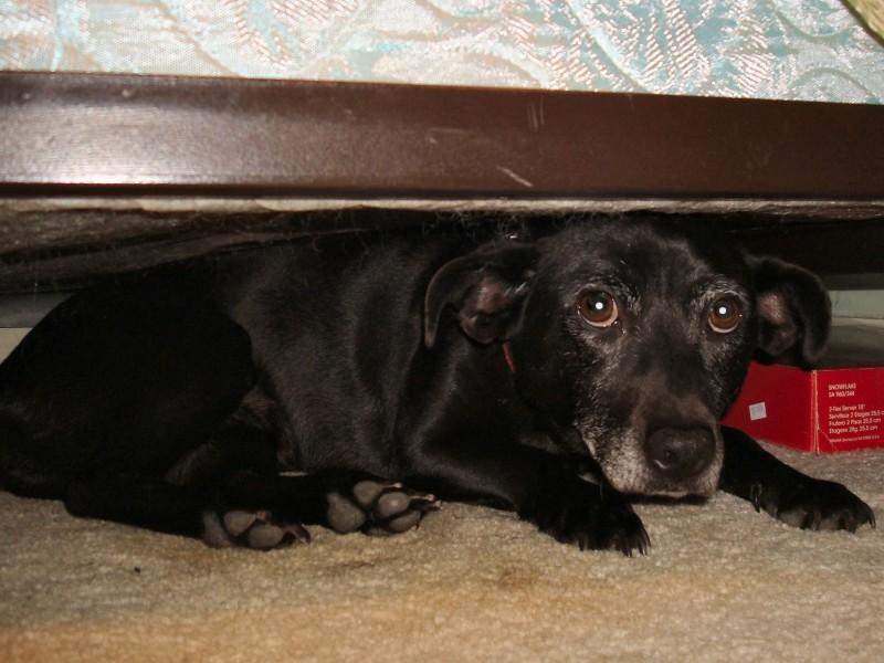 cane-sotto-letto