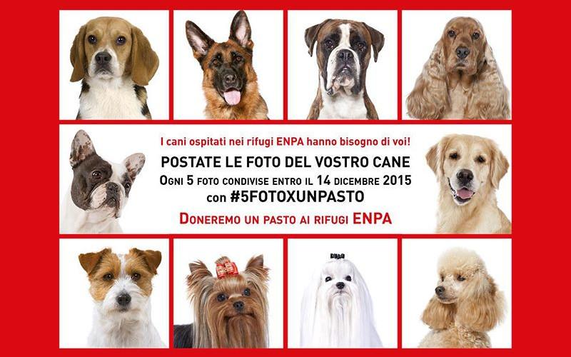 5fotoxunpasto-hashtag-instagram-royalcanin-enpa